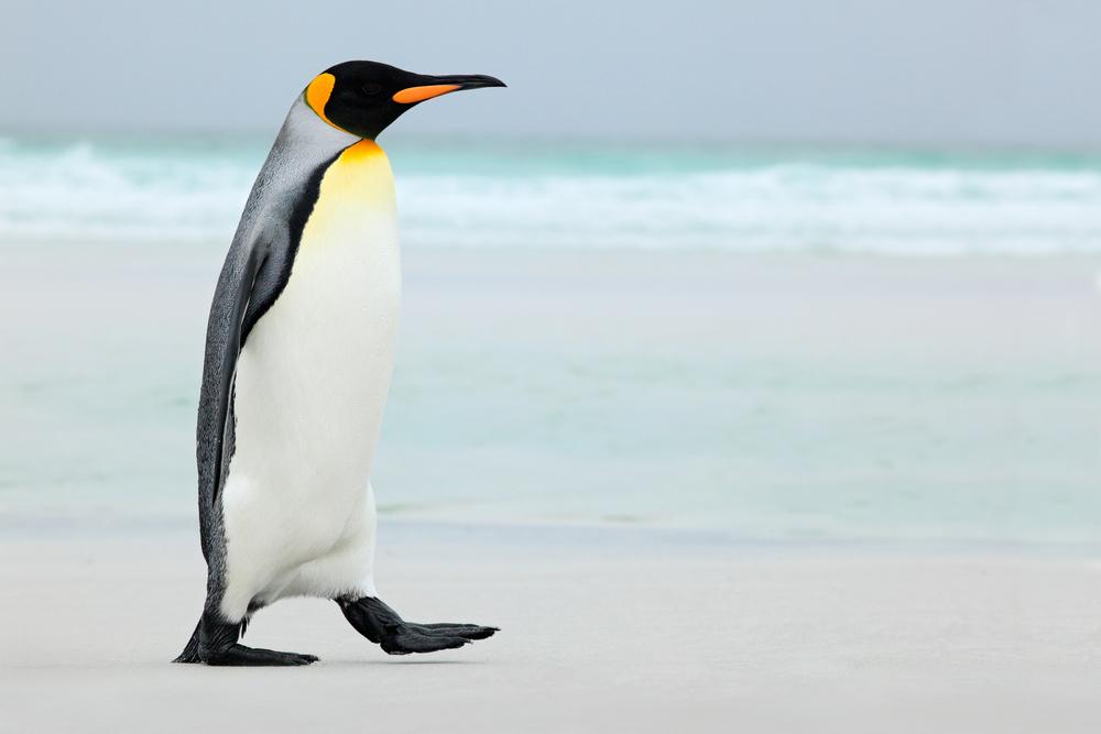 ペンギンアップデートが2年ぶりに更新! どのような変更点が?のアイキャッチ
